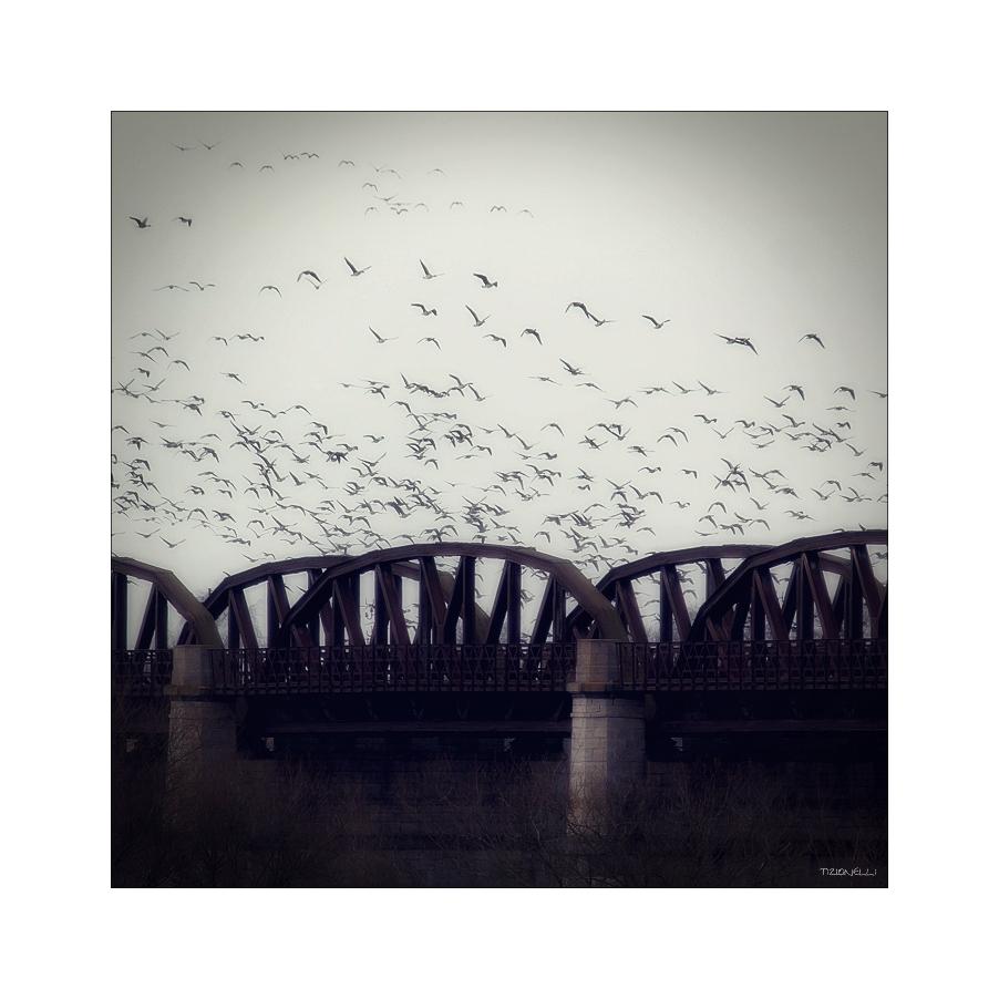 Brücke von Dömitz / Elbe