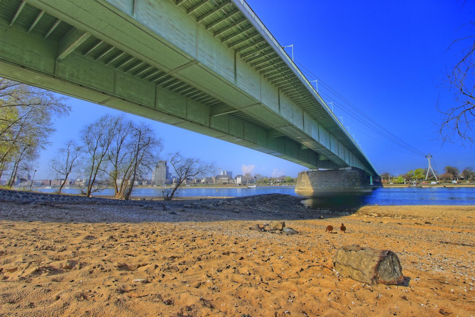 Brücken von Köln..mit Enten...