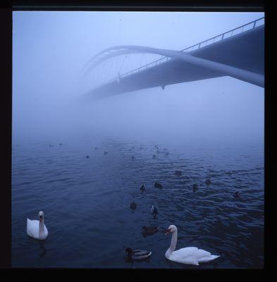 Brückengetier