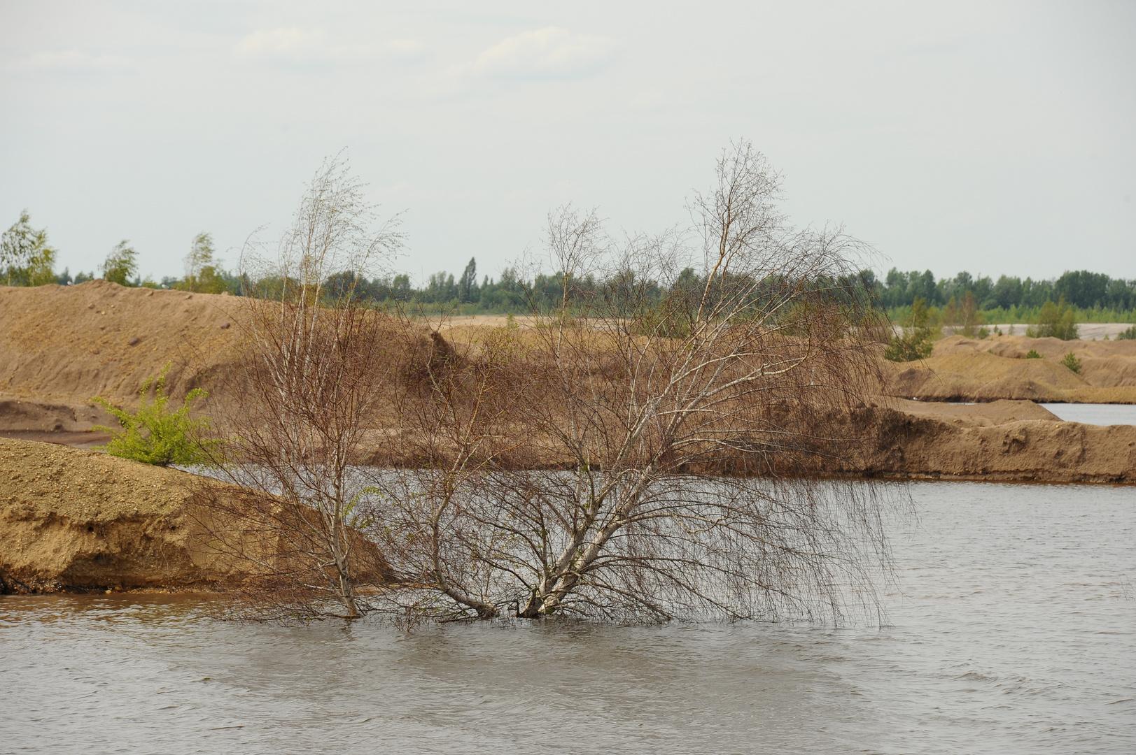Brückenkippe Zwenkau 2011
