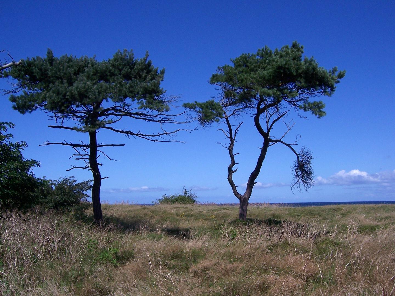 Brüder im Kampf gegen Wind und Wetter