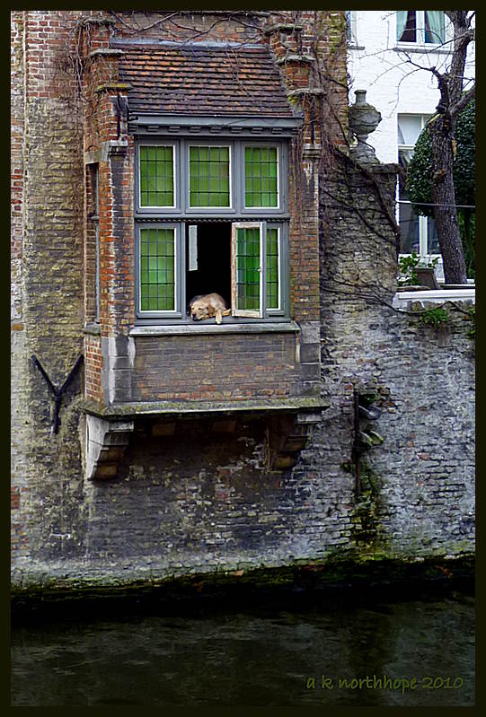 br gge hund im fenster hondje in brugge h user am kanal foto bild europe benelux. Black Bedroom Furniture Sets. Home Design Ideas