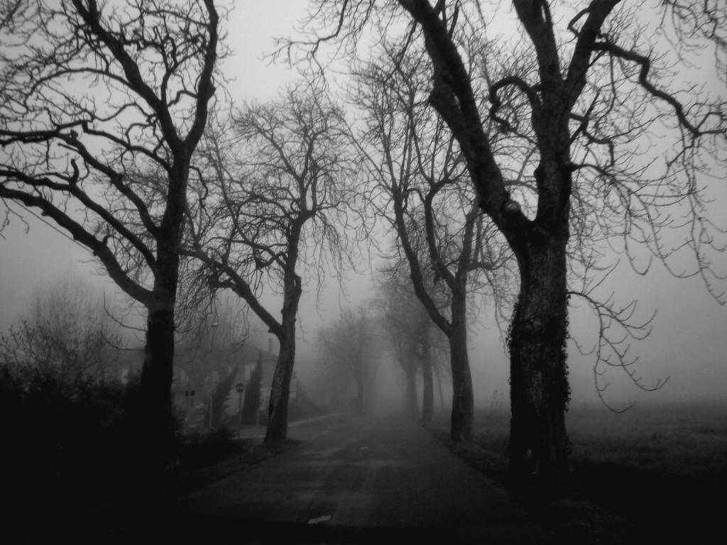 ... bruillard ...