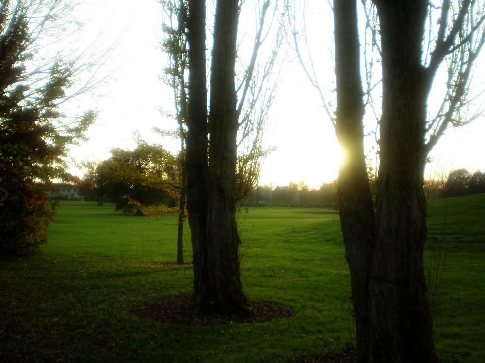 Brume au parc