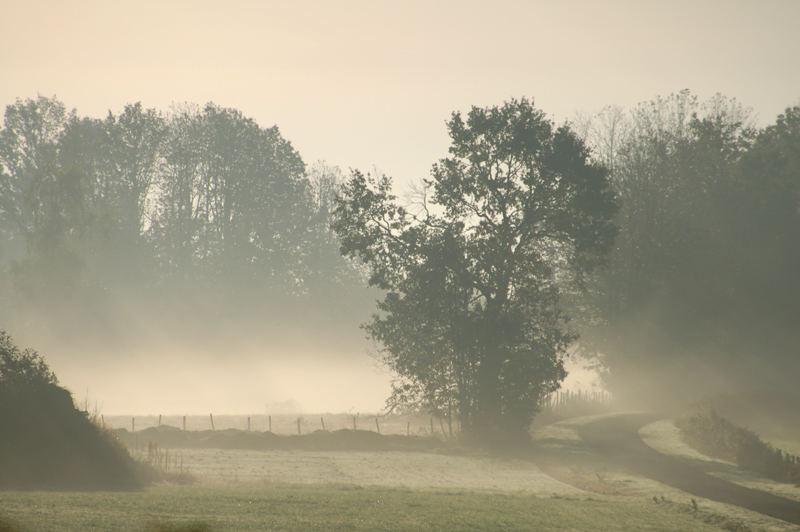 Brume et brouillard