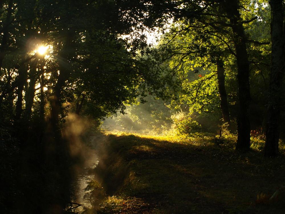 brume foret des landes 7h45 du matin