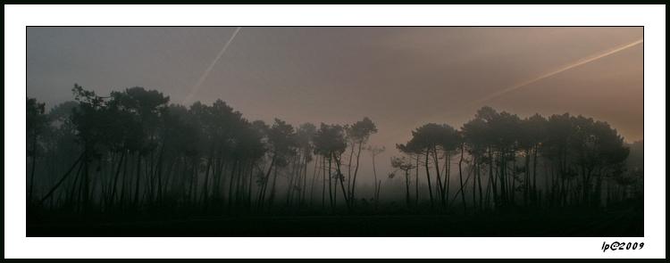 Brume matinale dans la forêt Landaise
