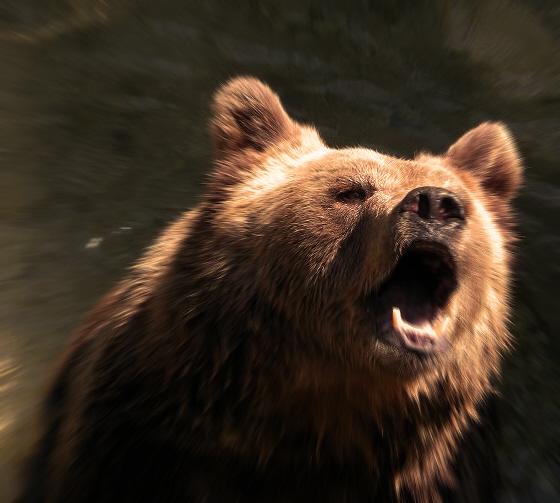 Brummiger Bär