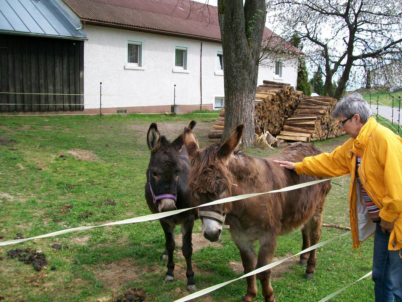 Brunhilde mit Eseln