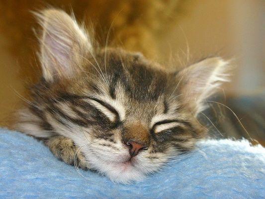 Bruno schläft........ und kann nicht´s mehr anstellen