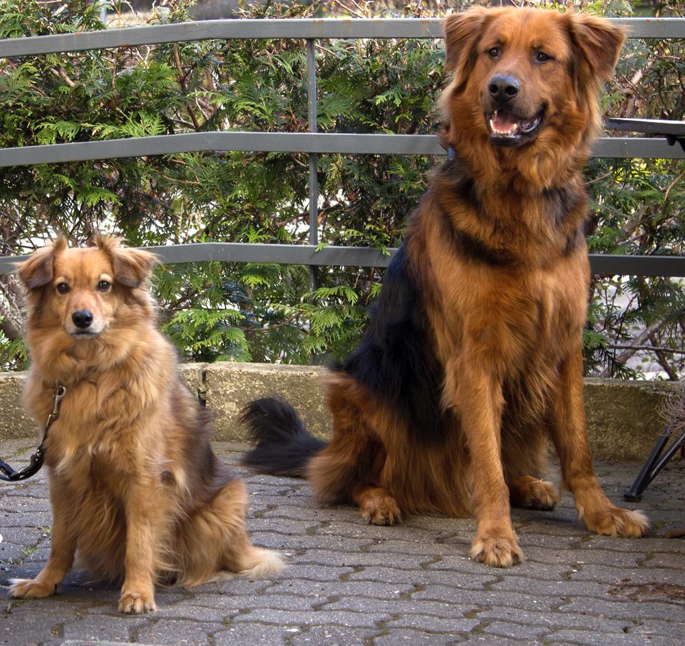 Bruno und Luna