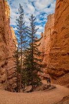 Bryce Canyon Detail 2