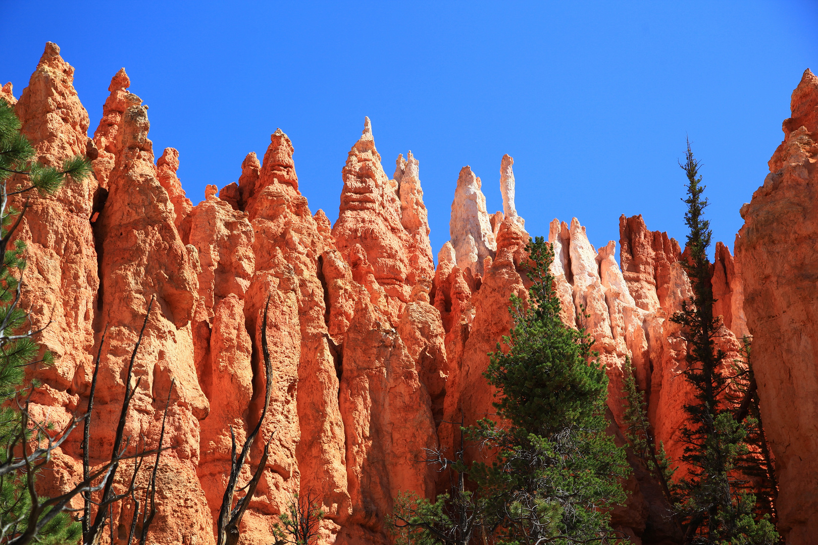 Bryce Canyon in USA