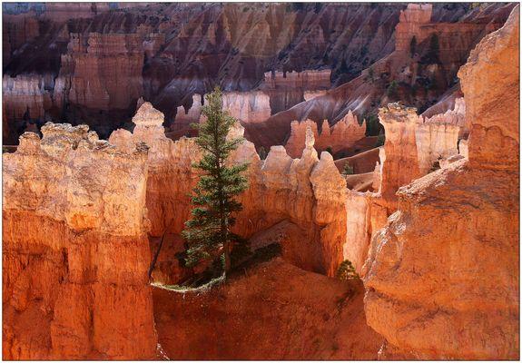 Bryce Canyon NP # 20