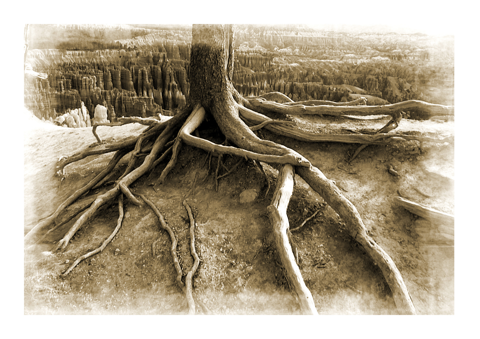 """Bryce NP """"Roots"""""""