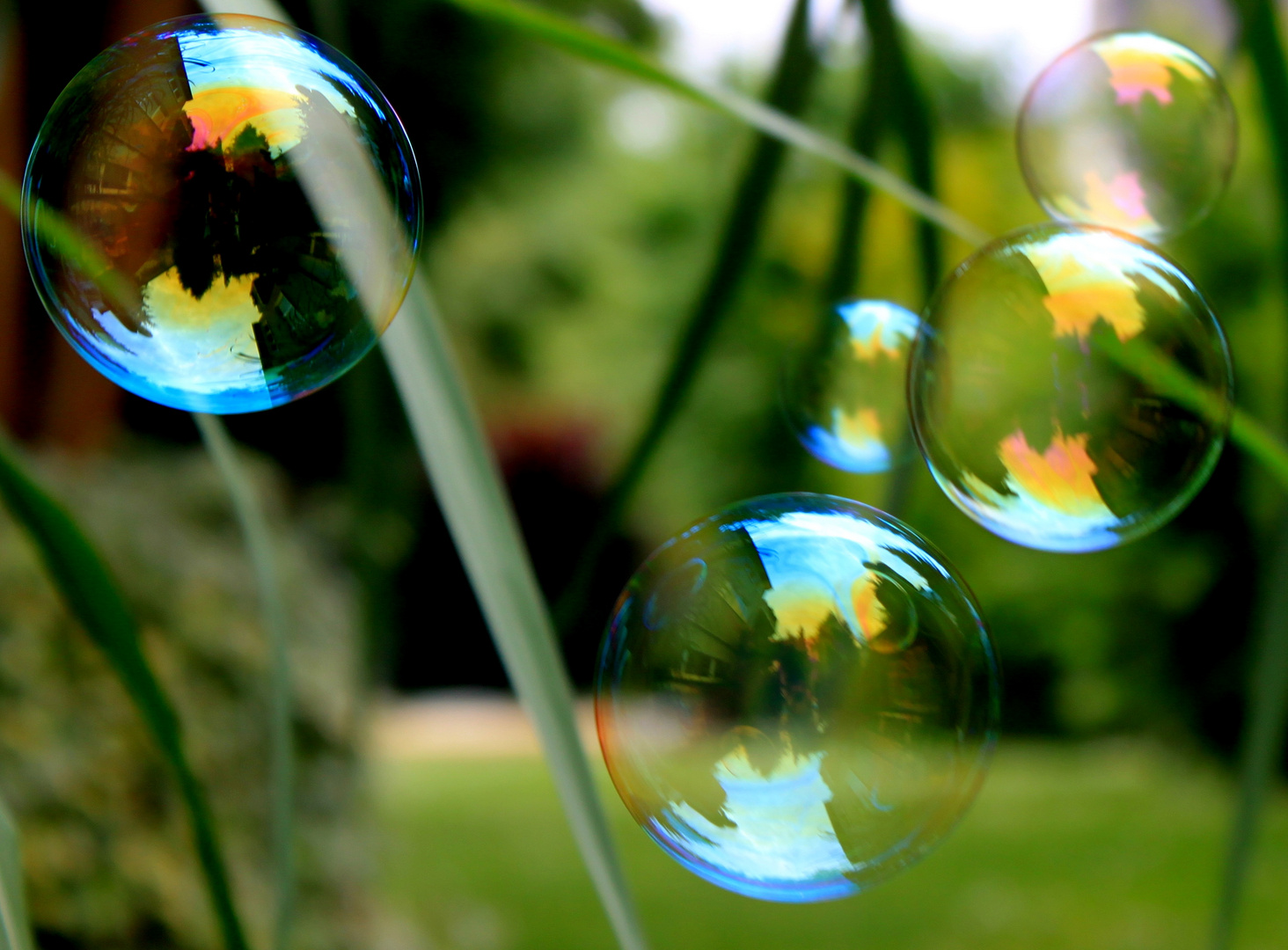 bubble ´s reflextion