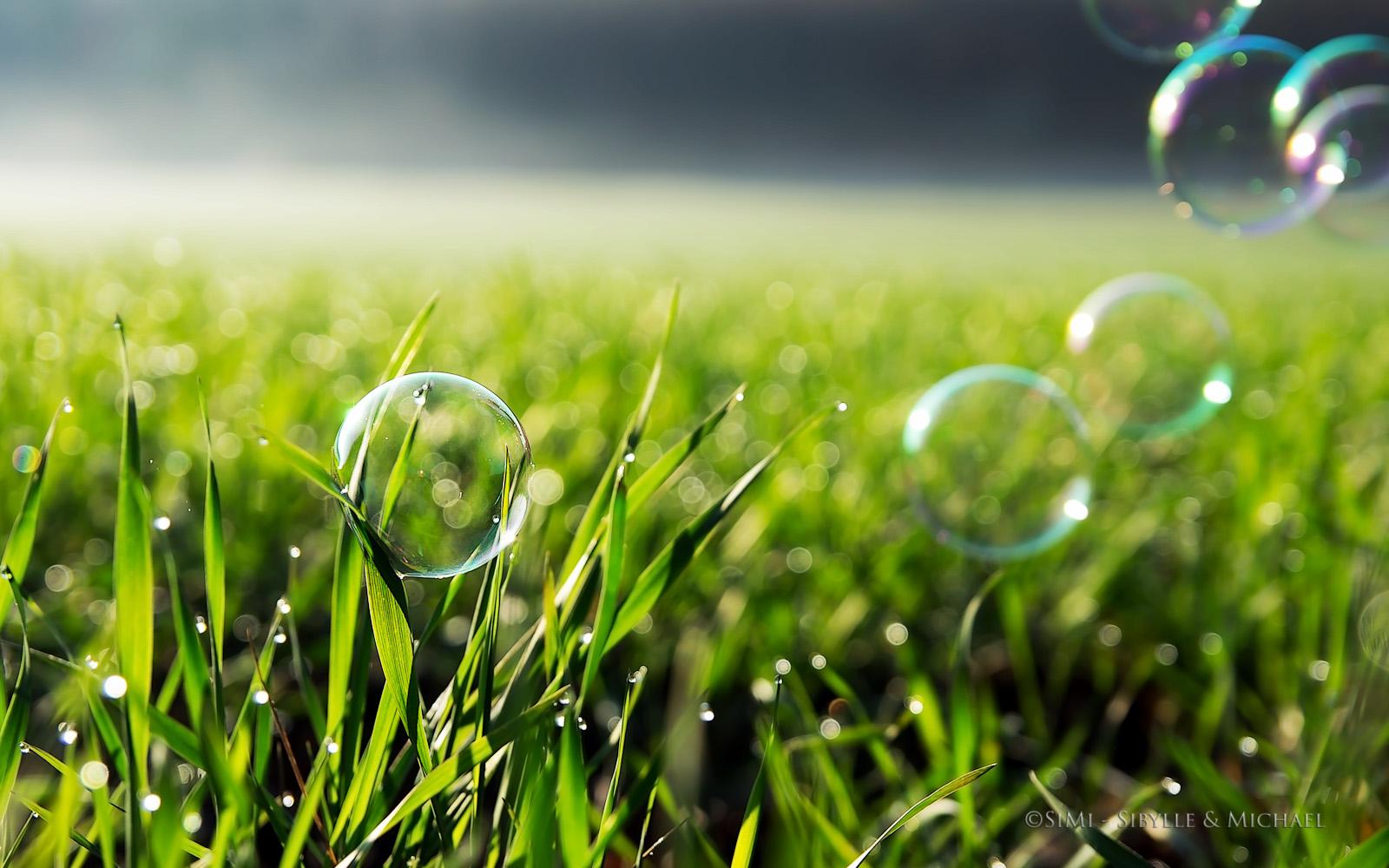 ... Bubbles [ 2014 ]