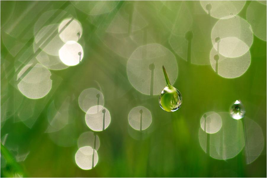 ..bubbles..
