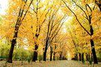 Bucharest - Luce d'autunno