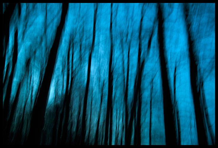 Buchen in blau