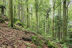 Buchenbergmischwald