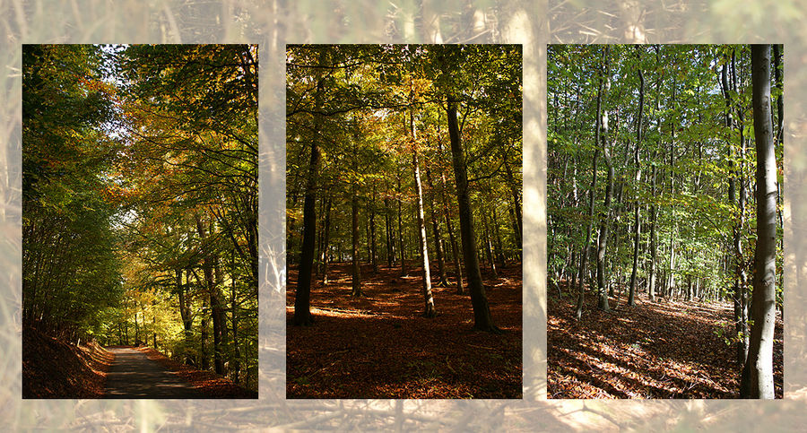 Buchenwälder im Nationalpark