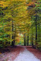 Buchenwald im Herbst I