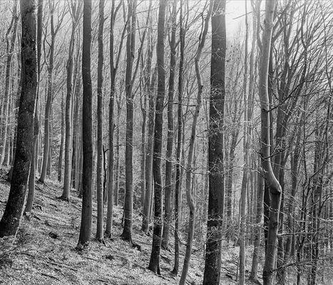 Buchenwald - Sonnenschein