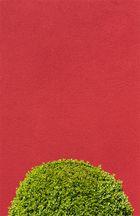 Buchs vor Rot