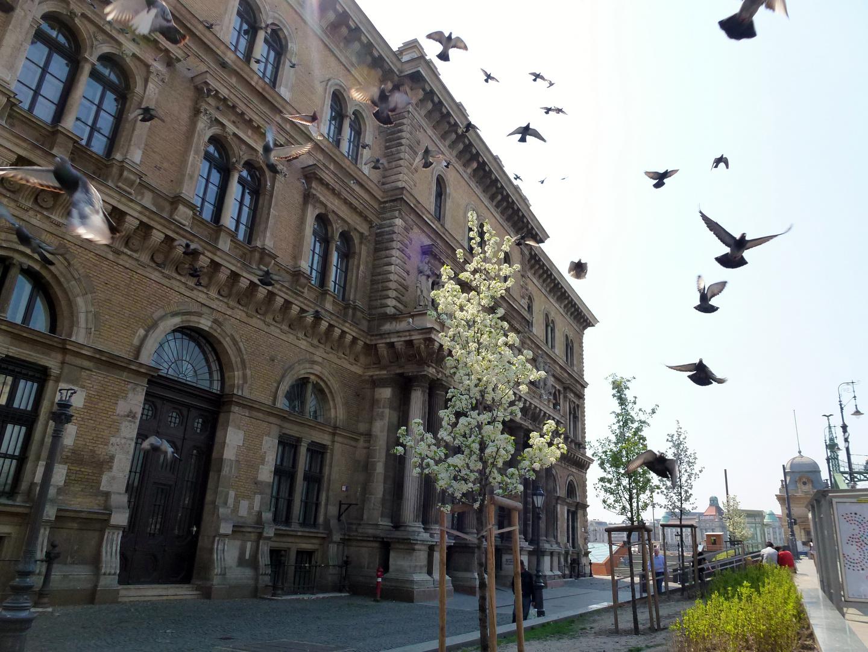 Budapest Schnappschuss Tauben