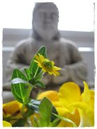 Buddha and the flower
