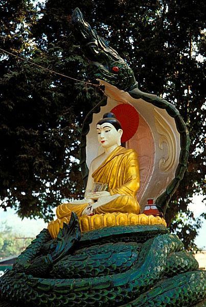 Buddha beschützt vom Naga-König