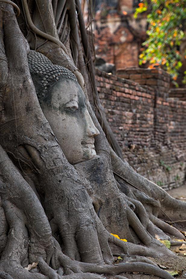 Buddha im Feigenbaum