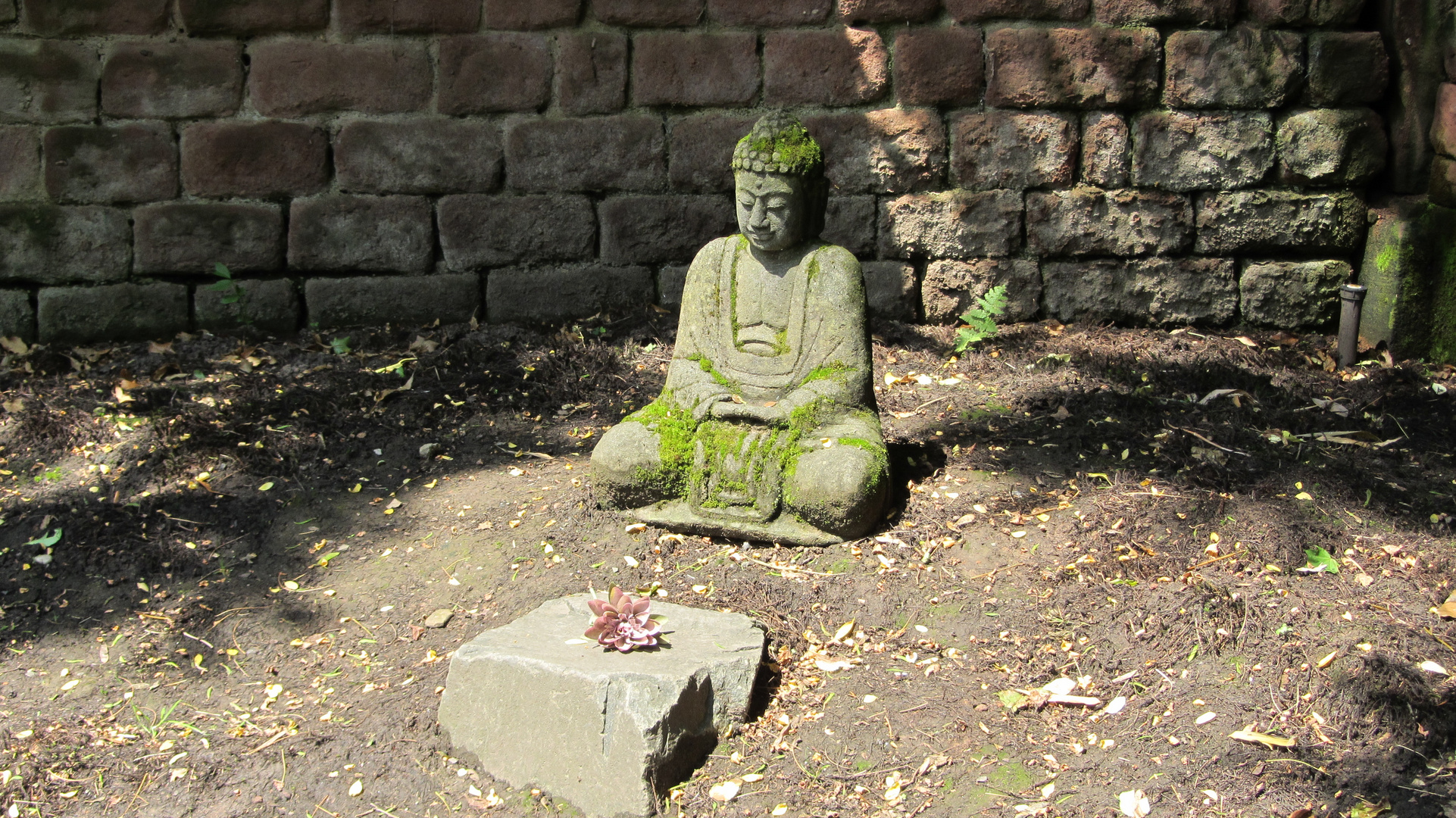 Buddha - Ruhe In Frieden