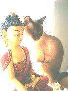 Buddha und Tashi - vereint in Stille