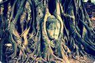 Buddhakopf Ayutthaya