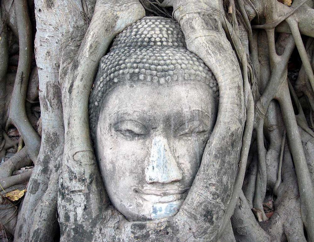 Buddhakopf im Wat Phra Mahathat