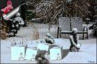 Büchenbacher Schneebälle ....