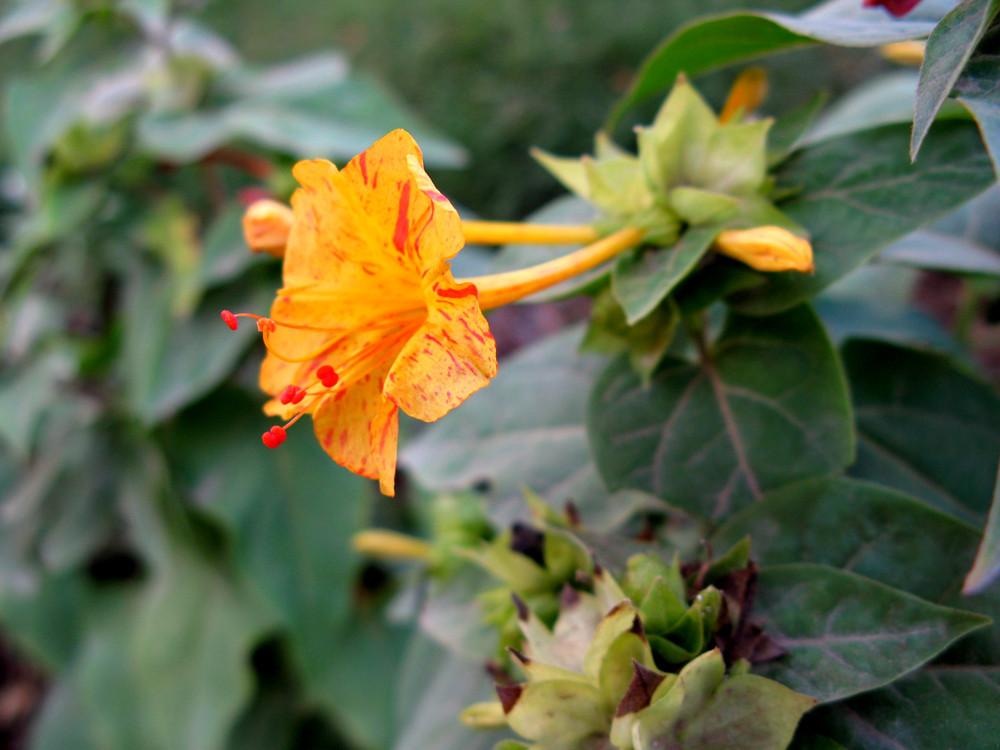 Buenas Tardes Ii Imagen Foto Plantas Flores Solo
