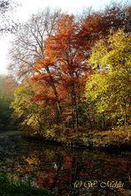 Bürgerpark Bremen im Herbst