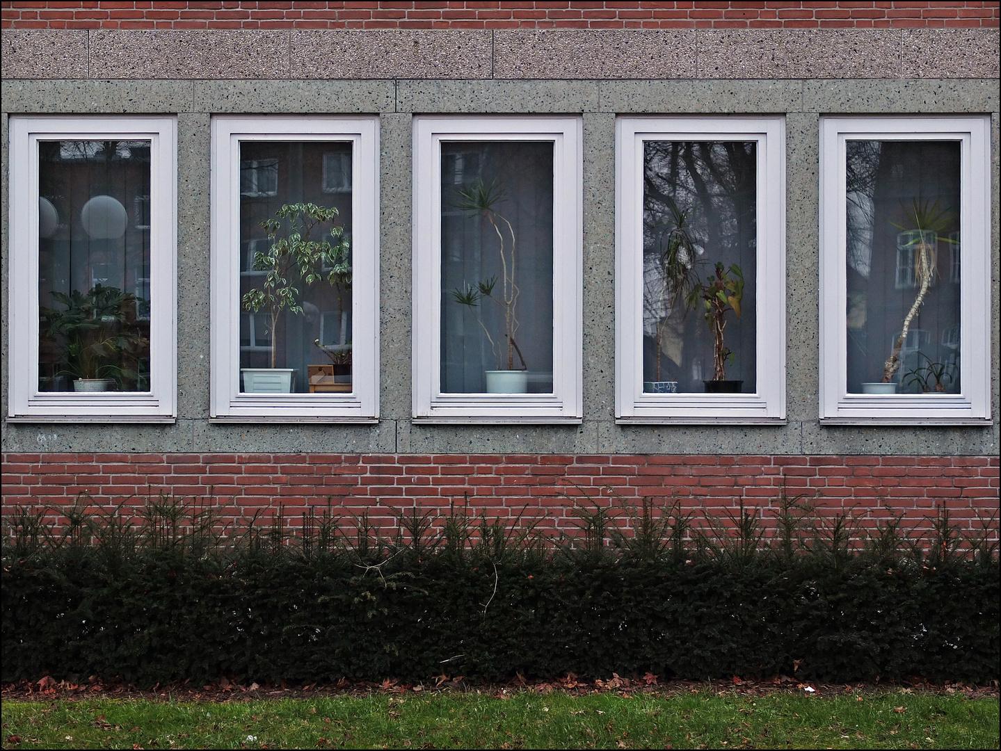 Büropflanzen