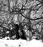 Büsche bei Schnee