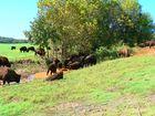 Buffalo Range near The Homeplace 1850