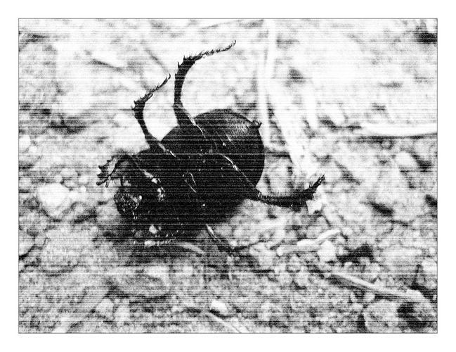 bug on it's back