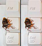 Bug on Key Board