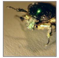 Bug Soul