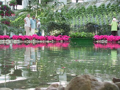 Buga: Wasser - Pflanzen