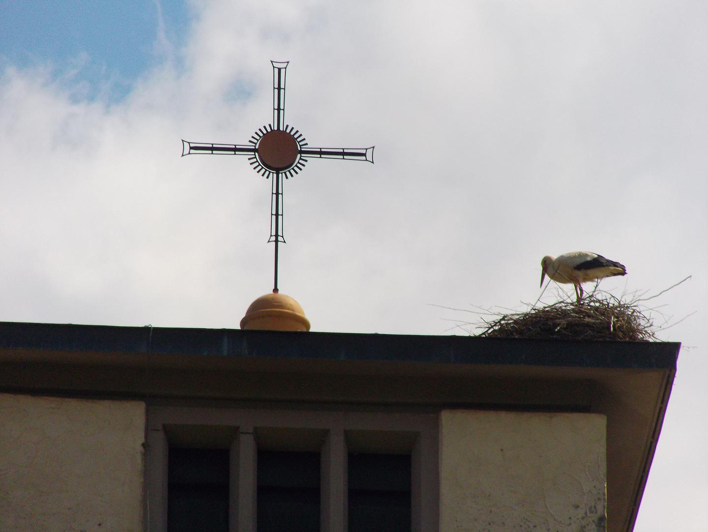 Bugginger Storch im steifen Nordwind