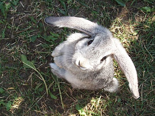 Bugs Bunny (2)