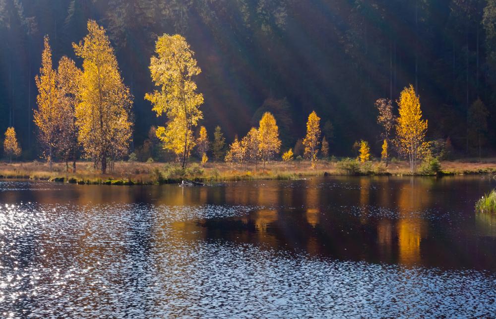 Buhlbachsee Herbst